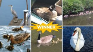 Mental Health Awareness Week 2021 nature photography competition